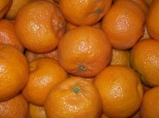 Bio-Clementinen- ecocion