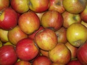 Apfel Marnica  Demeter