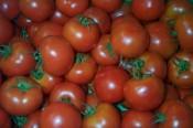 Tomaten vom Sozialen Ökohof BVH