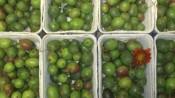 Regionale Mini Kiwi BVH vom Obstgarten