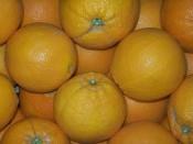 Bio Orangen von ecocion