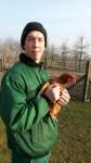 Junge Bruderhahn Hennen beim Ökohof
