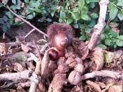 Eichhörnchen beim Nüsseklauen erwischt